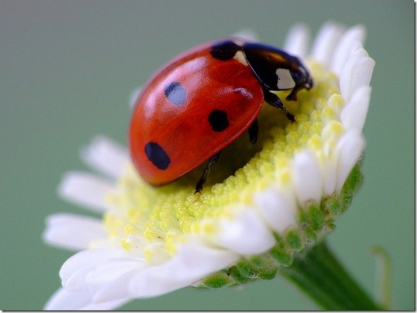 картинка вредный жук